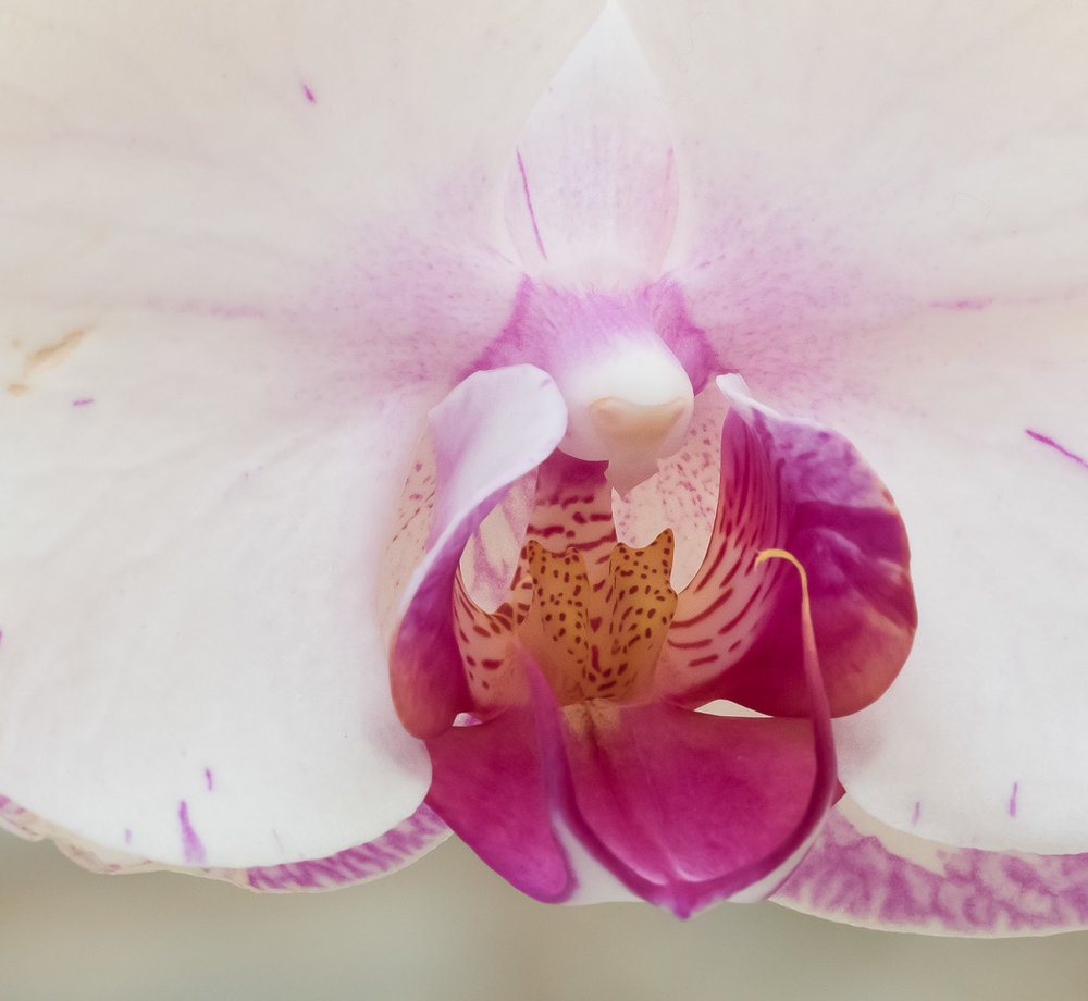 Brookside Orchid Show 2017-16.jpg