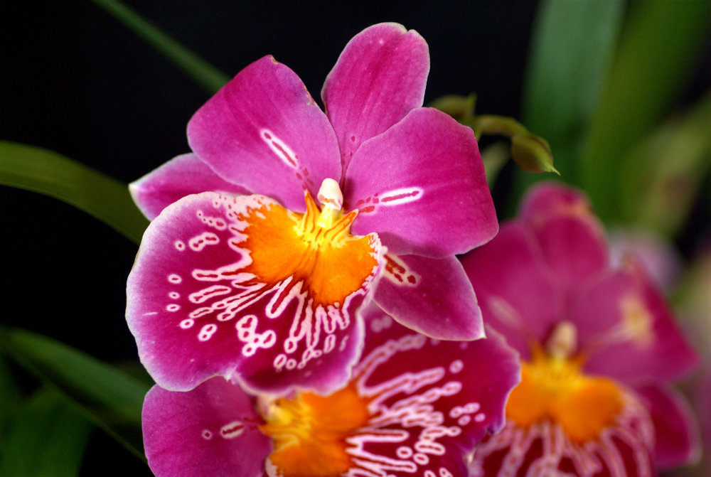 Orchid Rebloom Workshop #2.jpg