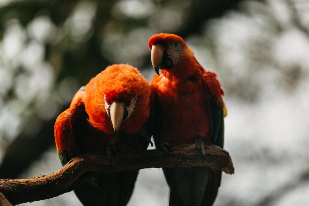 Honeymoon Costa Rica-7692.jpg