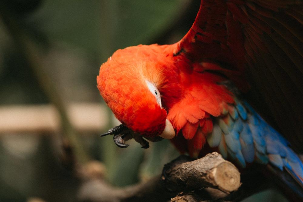 Honeymoon Costa Rica-7684.jpg