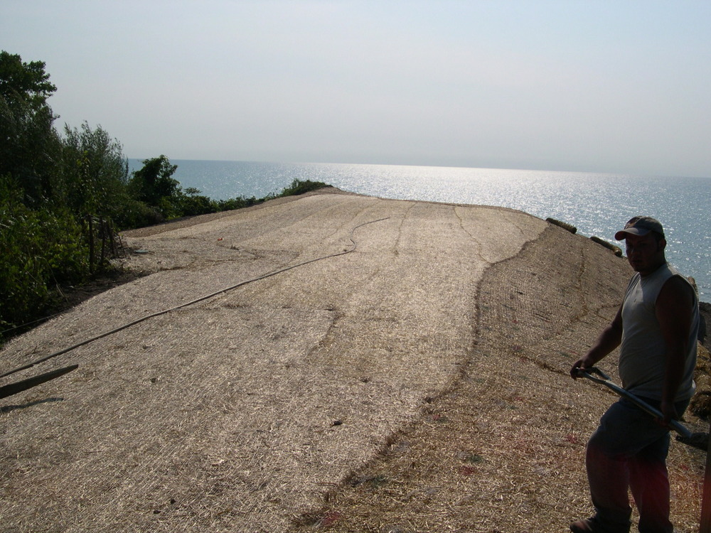 saving the bluff on lake michigan.jpg