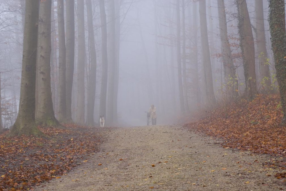 foggy_woods_man_dogs.jpg