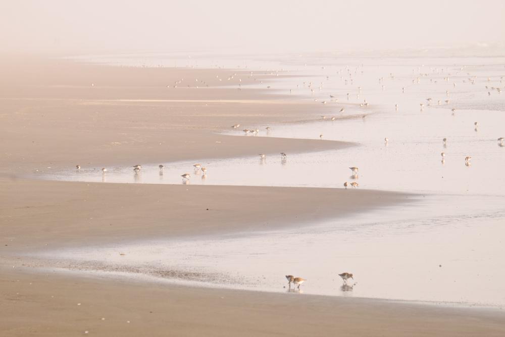 Beach-6.jpg