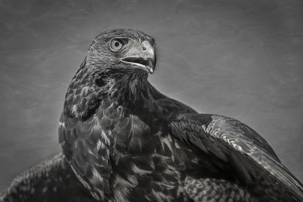 2014-10-18_Birds_Booker_0336-2.jpg