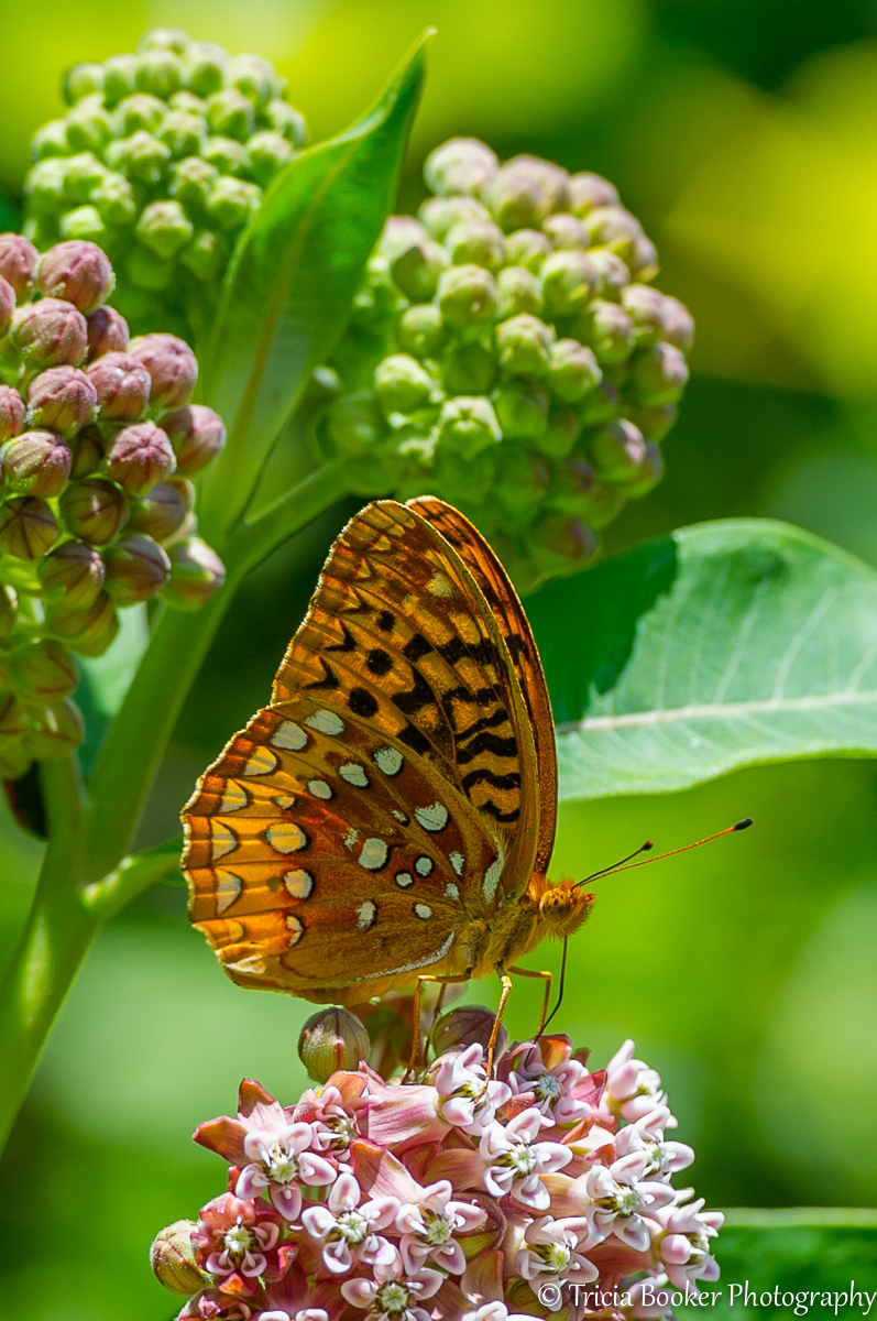 2012-06-08_Butterfly_Booker_0027.jpg