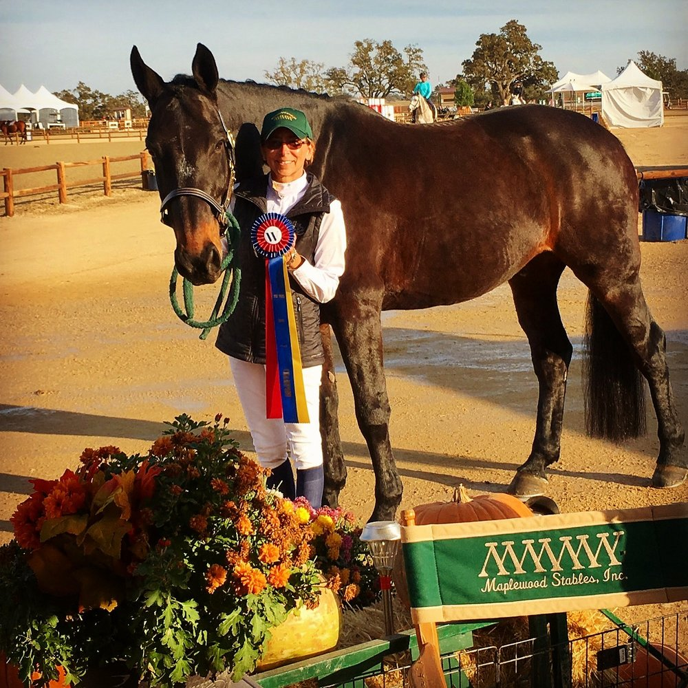 A successful return to the show ring with Dardam Q and Maplewood Stables.