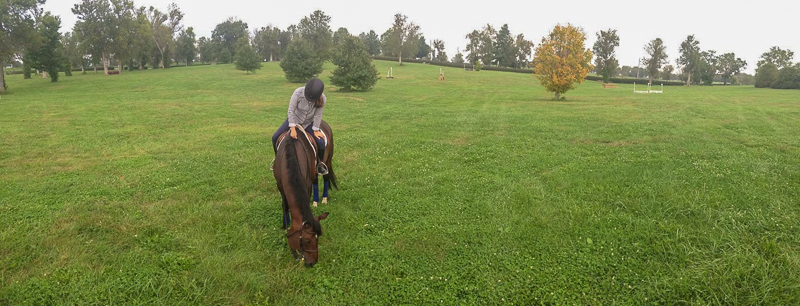 Junior Hunter Champion Quatrain and Laura Critz enjoyed some down time on the Kentucky Horse Park's cross-country course.