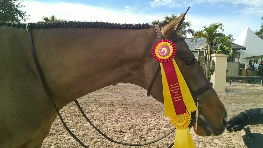 Sawyer modeling his ribbons!