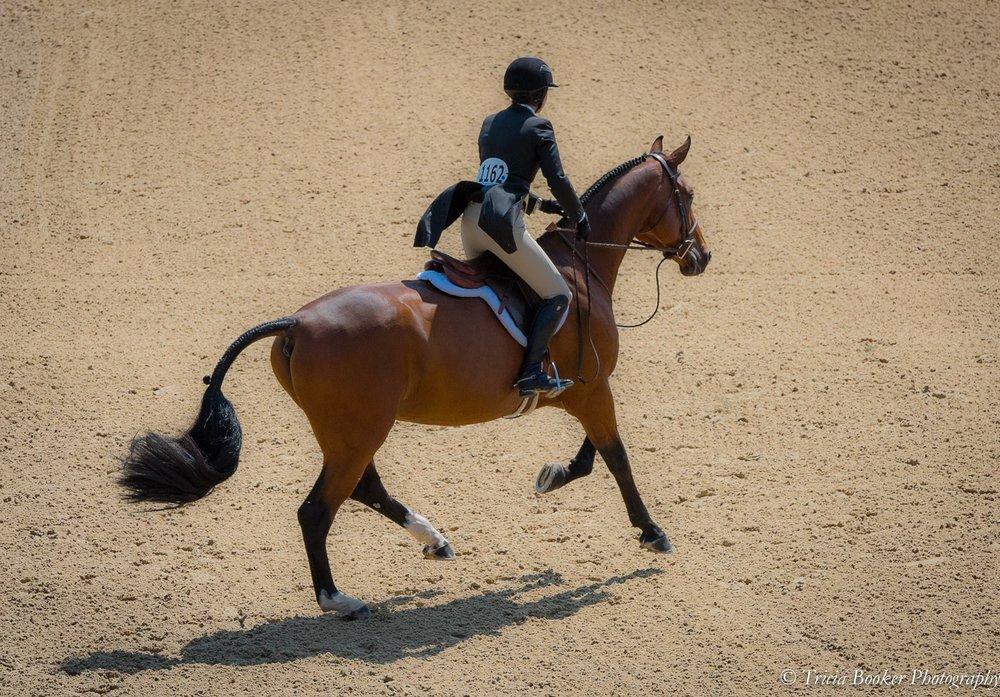 USHJA Championships - Kentucky Horse Park - August 2017