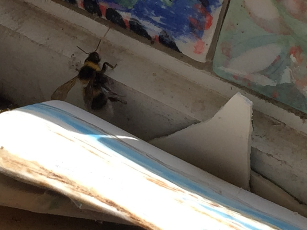 An Irish bee in Sara's studio