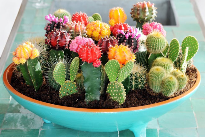 Cactus Container Gardening Workshop
