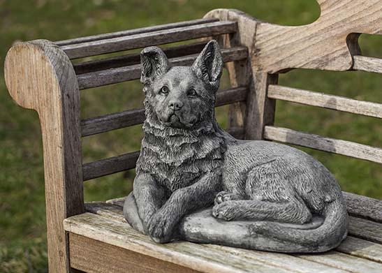 Shepherd Pup