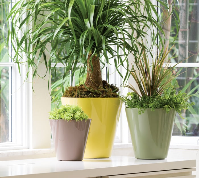 10 Things: Pots for your Houseplants ( Colorado Homes & Lifestyles )