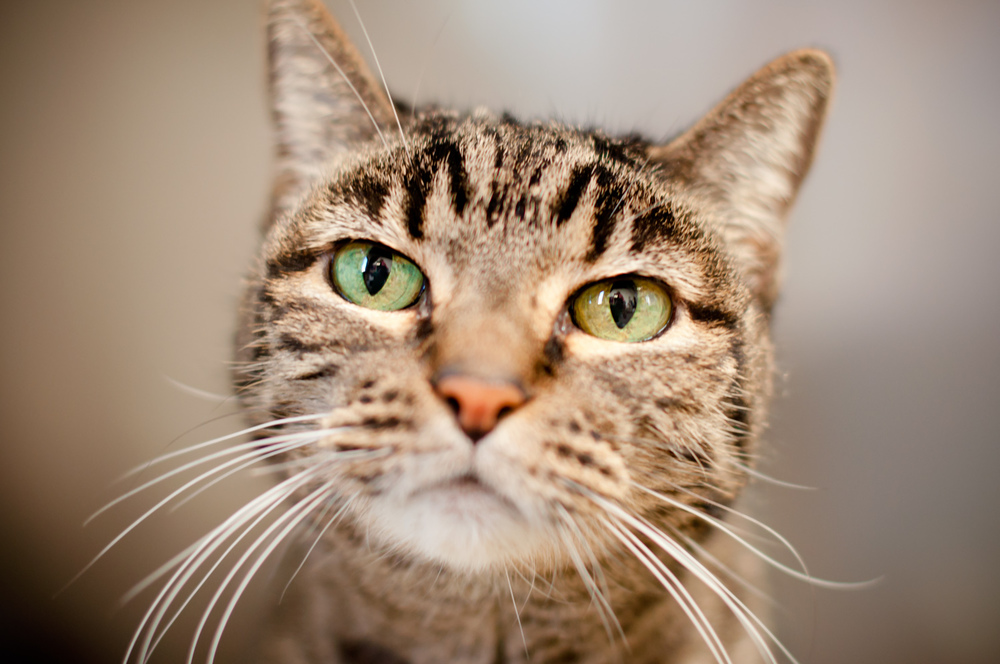 services-cat-visit.jpg