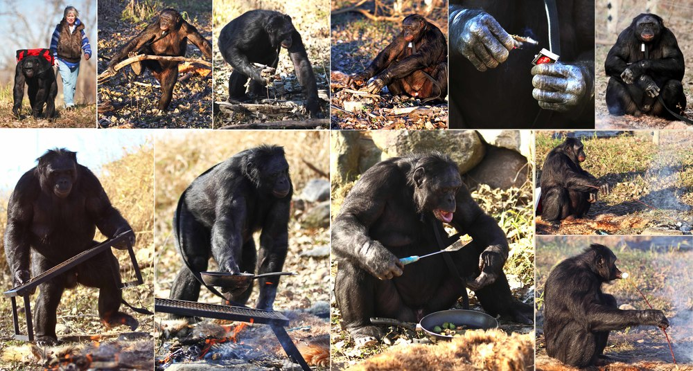 Monkey Making Fire Fires And Cook Making Him