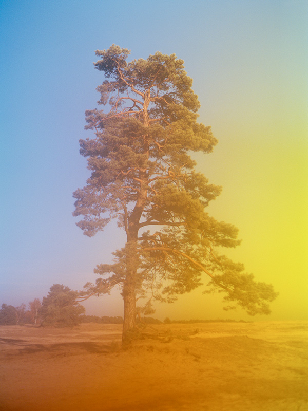 Colorful abstract photographic print of a tree in De Hoge Veluwe National Park in the Netherlands, available on Minted.com