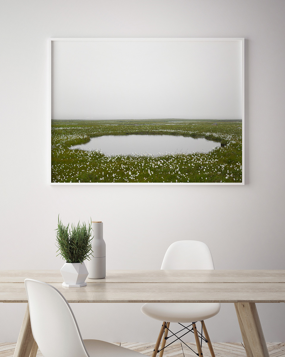 """""""Cottongrass (Langenes, Iceland)"""" ,   30""""x40"""", edition of 5"""