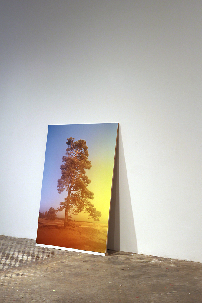 """""""Tree (Hoge Veluwe, Netherlands)"""" ,   40""""x30""""x.5"""", archival print mounted on plywood (part of a group exhibition at NURTUREart)"""