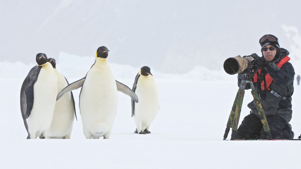 With emperor penguins, Snow Hill Island, Antarctica