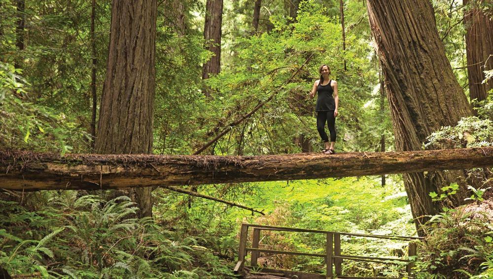 Humbolt Redwoods State Park |Weott, California