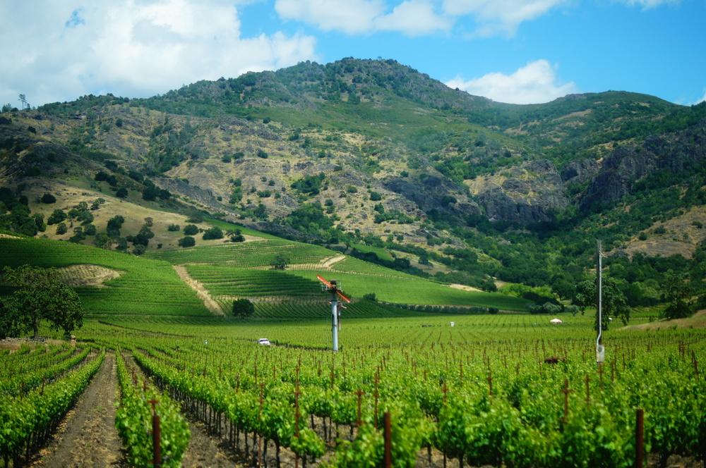 008_San Francisco_Wineries.JPG