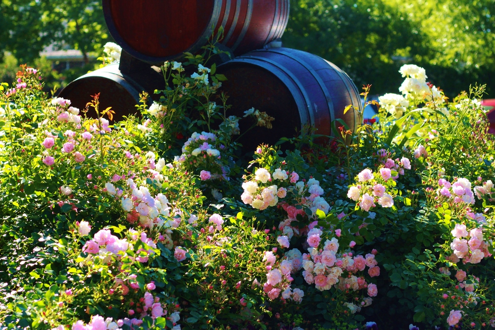 027_San Francisco_Wineries_VSattui.JPG