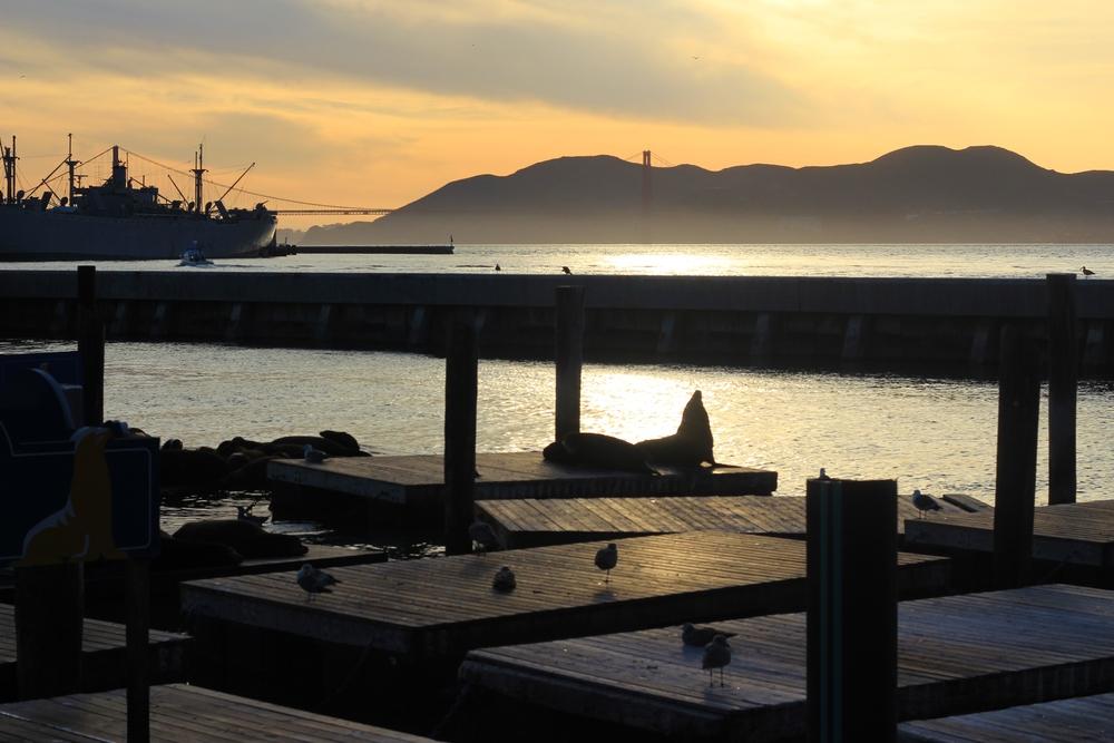0108_San Francisco_Pier 39.JPG