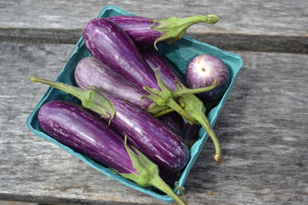 These fairy tale eggplants have nothing to do with the links below. But aren't they adorable?!?!