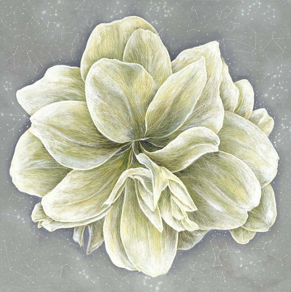 無塵 White Amaryllis