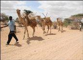 kenya-camel-library-1.jpg
