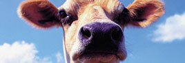 cowface.jpg