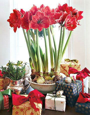 Amaryllis Centerpiece (photo: Country Living)
