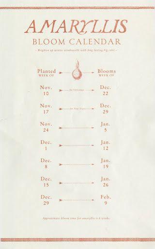 Amaryllis Bloom Chart (photo: Source)