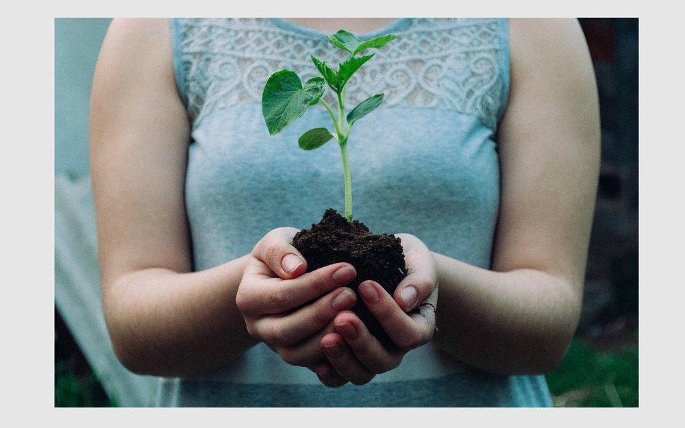 seedling-min.jpg
