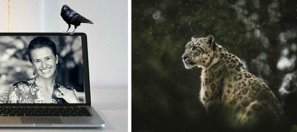 leopardheader.jpg