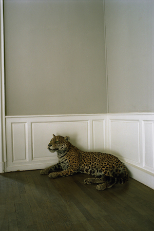 A panther guards the entry way at David's Salon de Coiffure