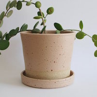 Wingnut and Co Ceramic Planter