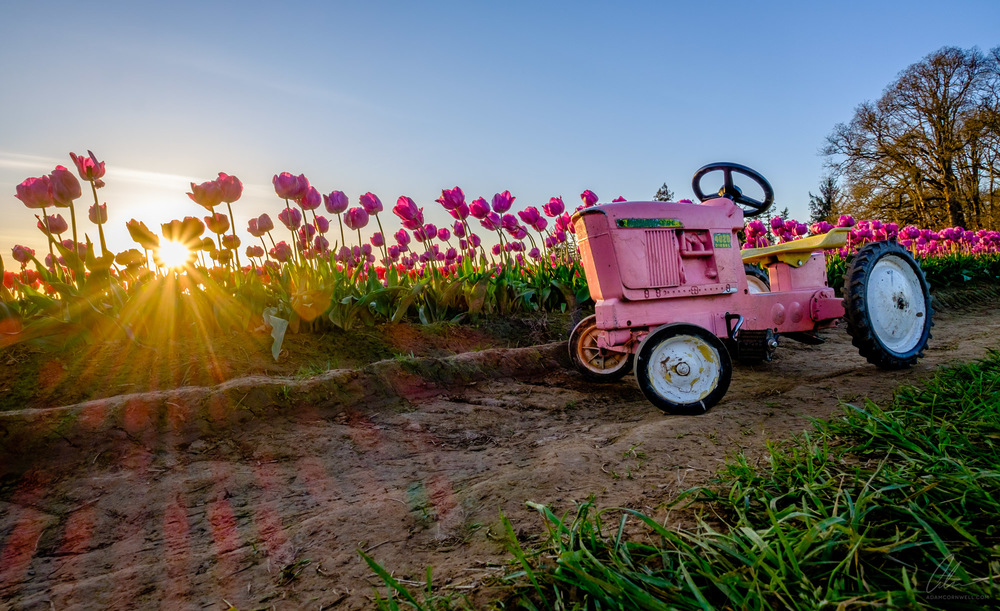 Tulips & Tractor