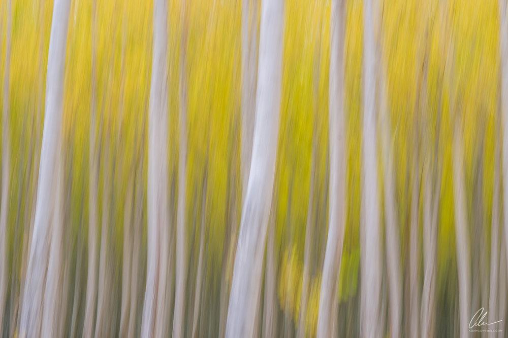 Poplar Forest III