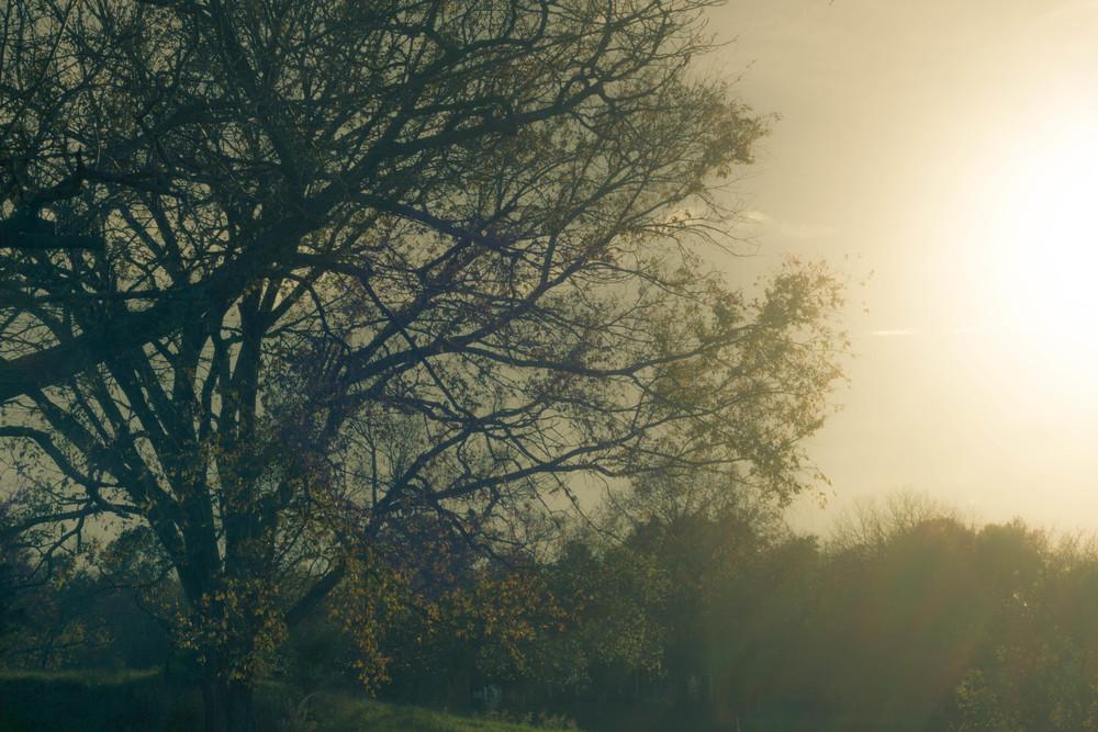 TreeIMG_9237(1).jpg