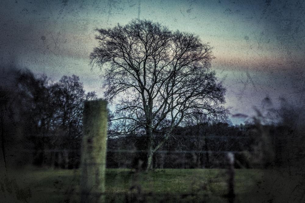 IMG_1684_Snapseed.jpg