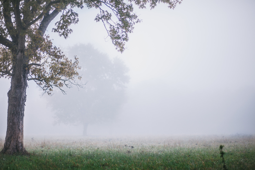 fogphoto.JPG