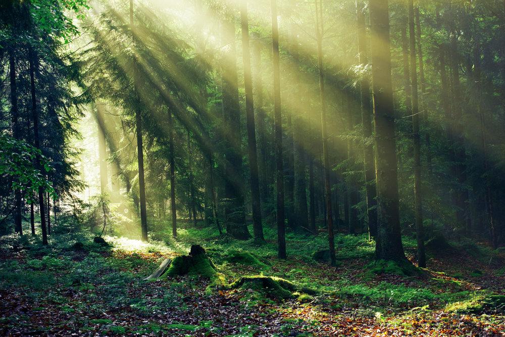Trolsk skog i Ons�y
