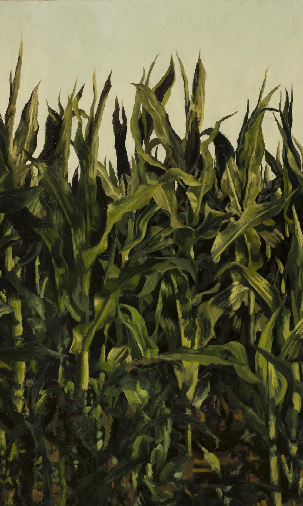 Corn Study