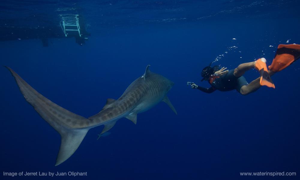 knekt-lau-shark.jpg