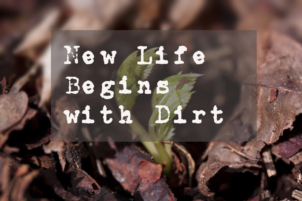 "Don't get stuck in the mud of your own dust. But let it be ""the fertile soil in which something new can grow."""