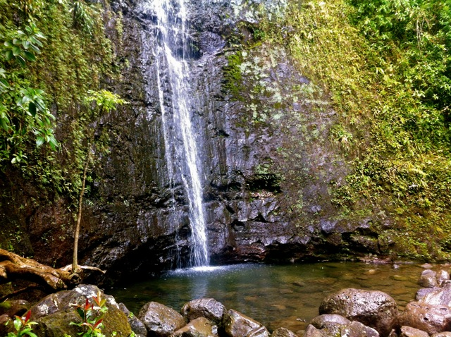 Manoa-Falls-Pool.jpg