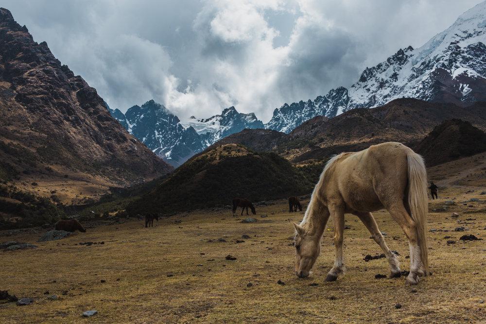 Cusco_Peru_2017_3-2.JPG