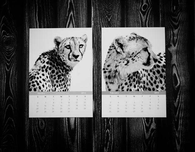 2013 cheetah calendar