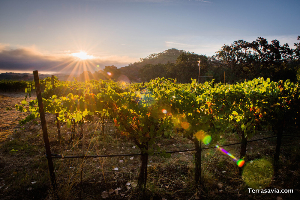 morning-over-vineyard-guest-view.jpg